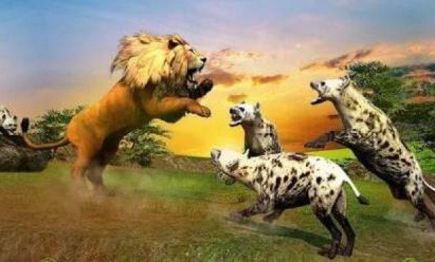 Game Singa Vs Harimau Android Singa Vs Harimau Vs Serigala
